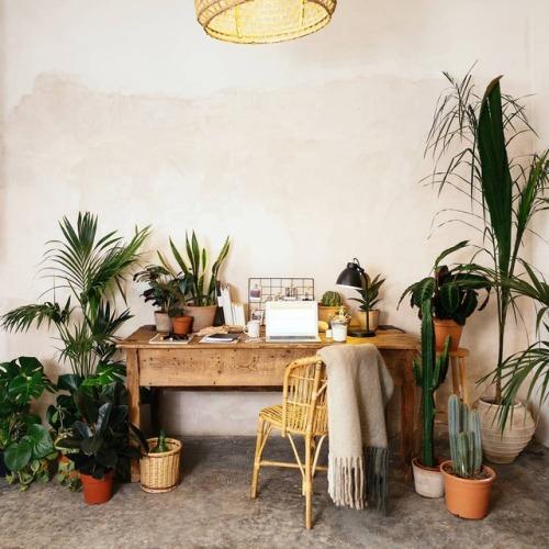 urban jungle indoor jungle house plants plants greenery home inspiration
