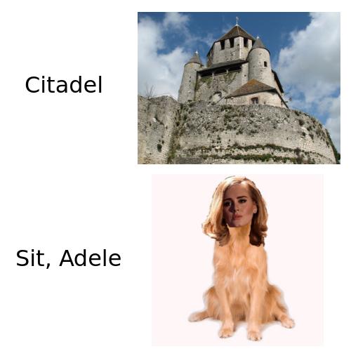 adele dog meme funny pun stupid shit