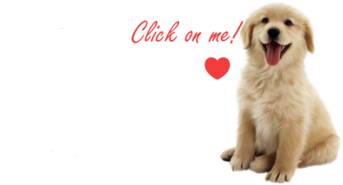 mine positive ig puppies click on me click on it funny