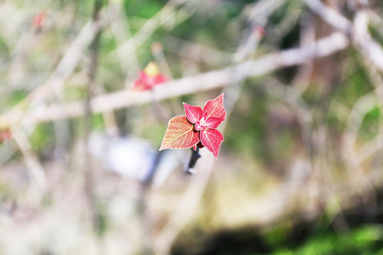『古芽』 新しいからって、良いものってわけじゃないから。 昔のものも、昨日のものも。 今存在するのであれば それはきっと代わり様がない良いものだから。 #写真#アメリカーノ#自然#葉#赤#植物#枝#photo#あおい珈琲#aoicoffee