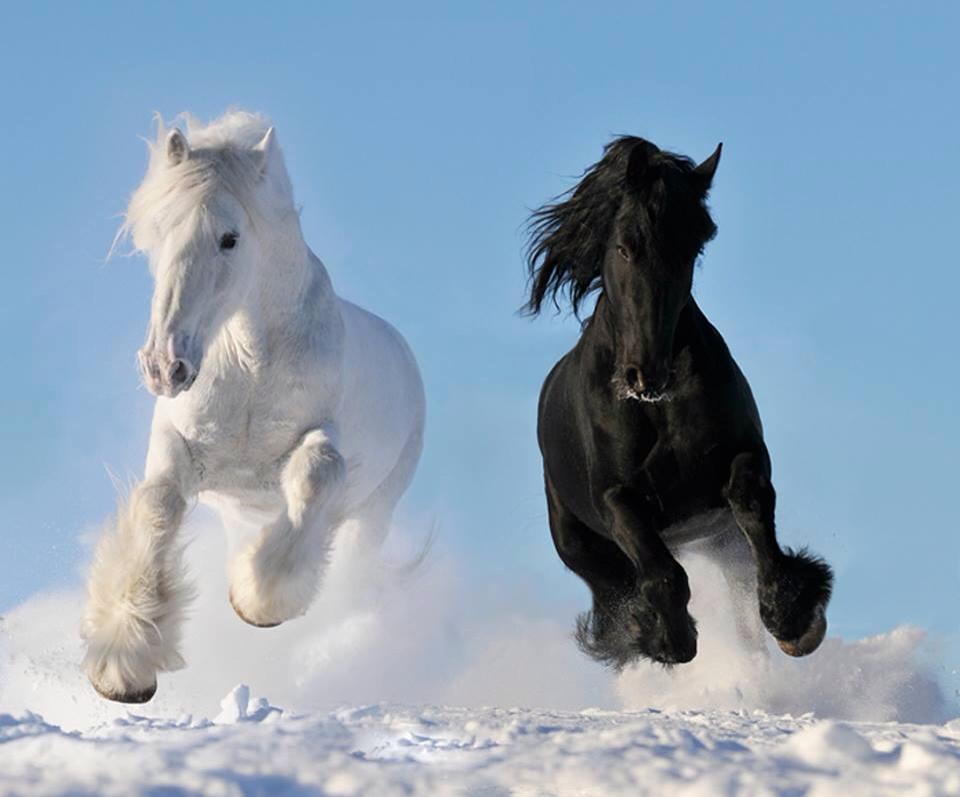 Lynn Gianni Weaver Black Horse Photography