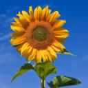 blog logo of ✨