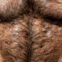 blog logo of Hairy Daddy/Bears