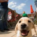 Vote Doggo and Pupper! tumblr blog logo