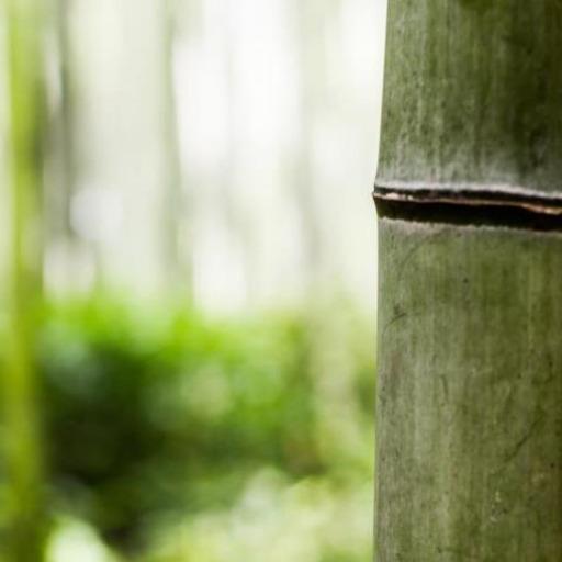 interpretation for the grove by akutagawa