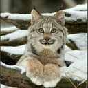 blog logo of the lewd lynx