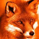 blog logo of FOXIES AID