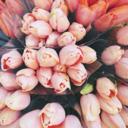 tuliptwelve tumblr blog logo