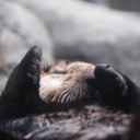 blog logo of Maggie loves otters