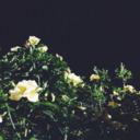 m.s. tumblr blog logo