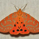 blog logo of lil Halloween moth