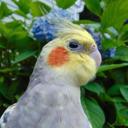 a girl and her bird tumblr blog logo
