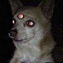 ダンジョンと犬  tumblr blog logo