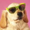 the good natured doggo network tumblr blog logo
