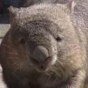 wombat tumblr blog logo