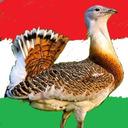 blog logo of Három a Magyar Igazság