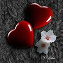 Tulipnoire tumblr blog logo