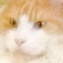 Ya know that cat tumblr blog logo