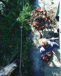 aujourdhui-cest-jardinage-à-la-friche