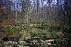 moor-wohldorfer-wald