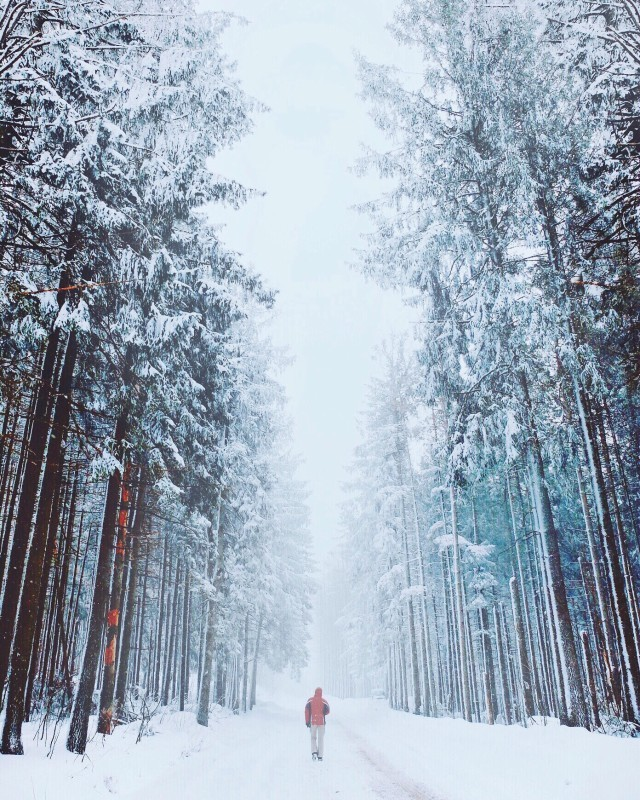 #snow#winter#woods#forest#frost#mist#fog#person#f