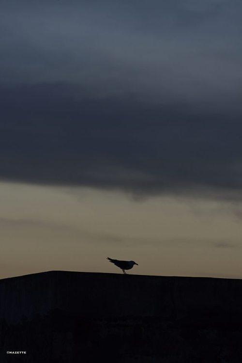 photographer on tumblr original photographer bird vertical photography Silhouette Photography