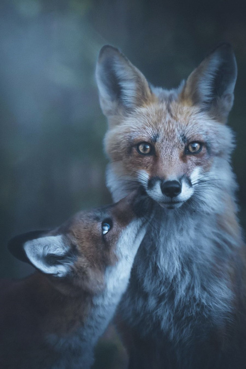 Planet Earth  mantis_photography #Animals#Nature#Travel#Photography#Portrait#Fox#up