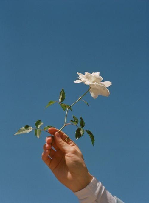 blue blue sky flowers rose pale blue pale grunge grunge blue aesthetic aesthetic white blue and white