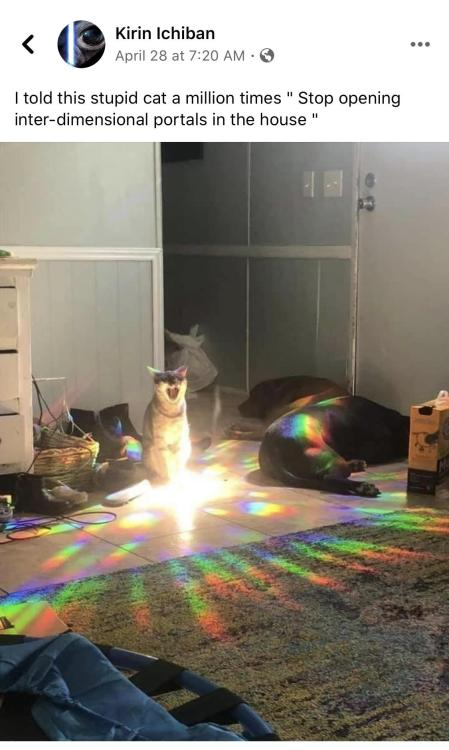 witchesversuspatriarchy:It's ok the pups are guarding. #funny#cat#picture