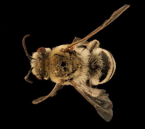 south dakota badlands national park national park park cellophane bee bees usgs