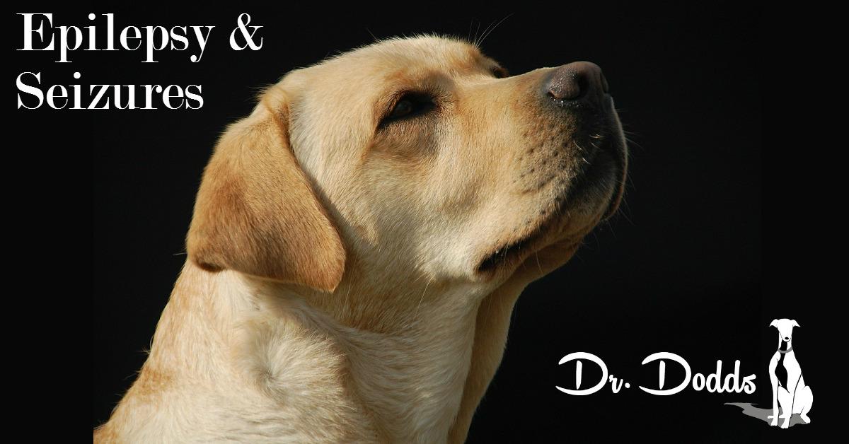 give dog honey after seizure