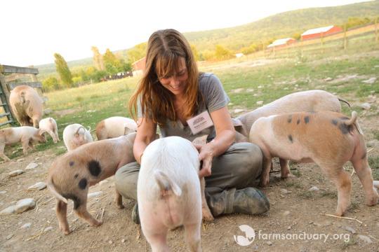 Animals of Farm Sanctuary — Farm Sanctuary's 14 Facts about