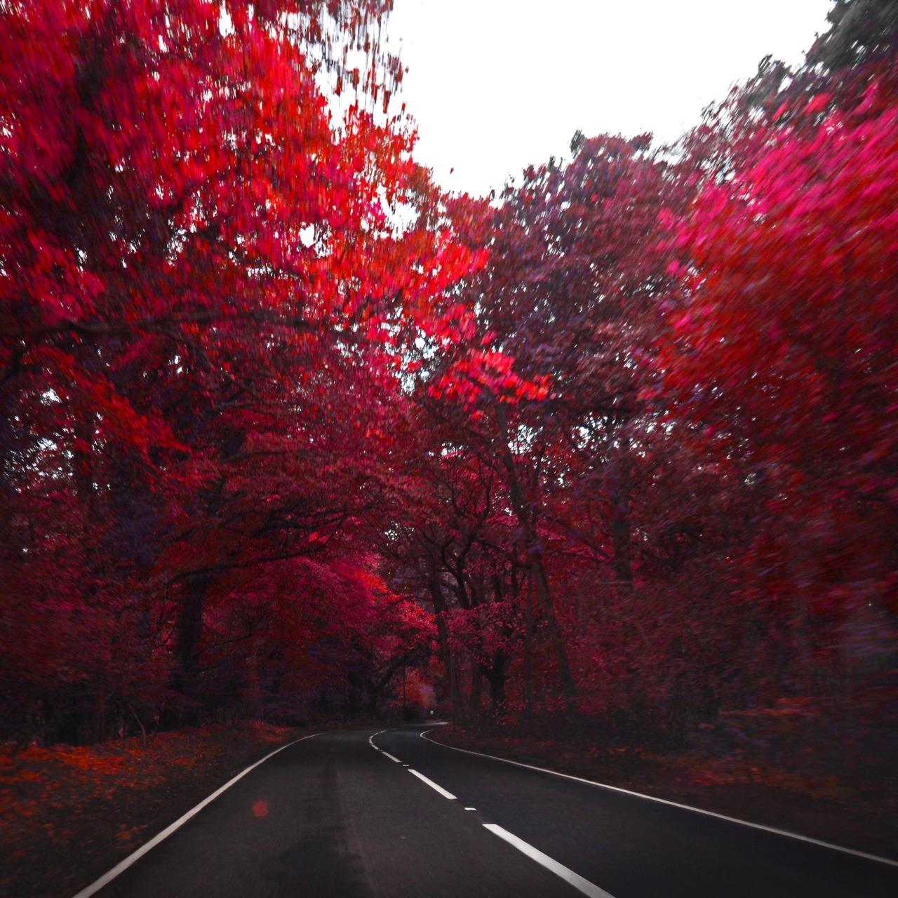 Рогоносец прикольные, прикольные картинки в красном цвете