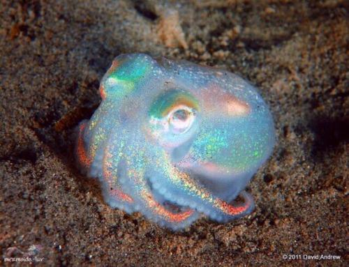 mermaid sereismo sereia holographic seapunk octopus opal nature natureza tropical