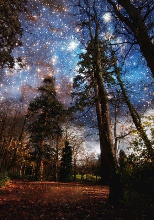 night sky enchanted mesmerizing forest mystical