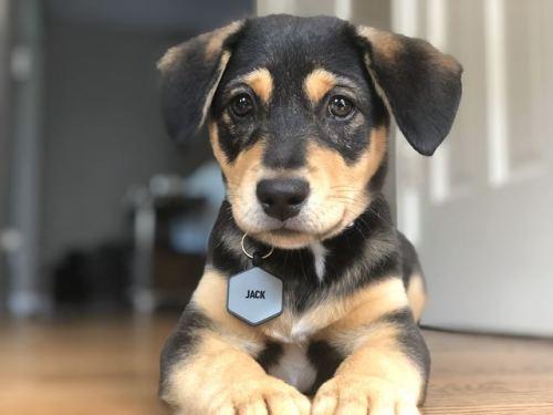 puppiestotherescue