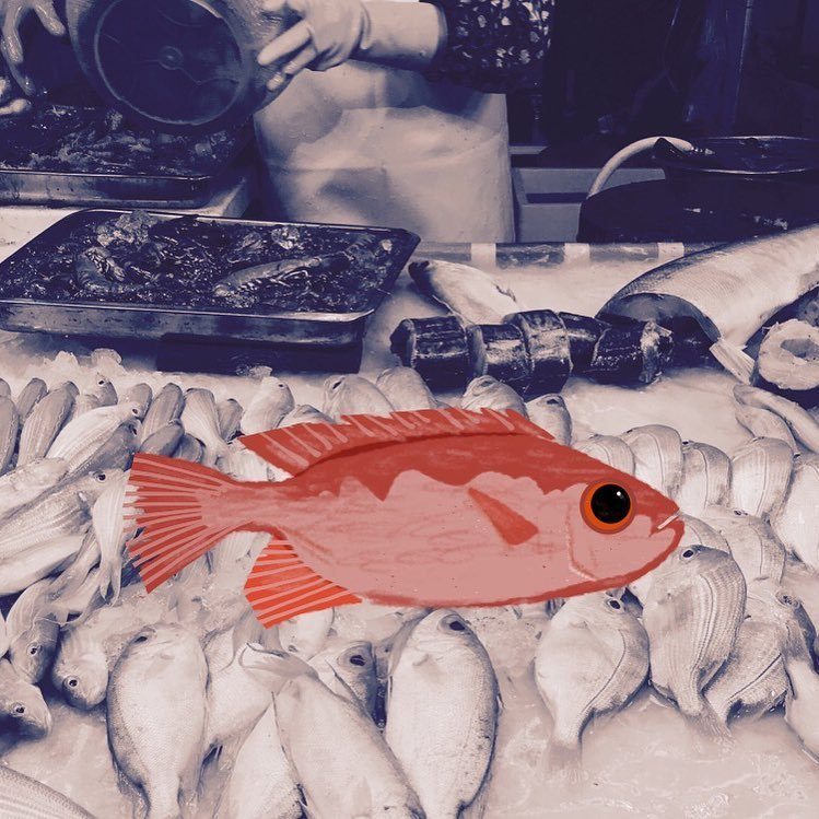 Buy a fish from market.