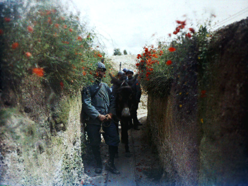 world war one world war 1 world war i first world war ww1 wwi history real 1916 ferme des marquises france french military army infantry soldiers animals trench colour color photography war photography photos images albert samama-chikli autochrome ecpad