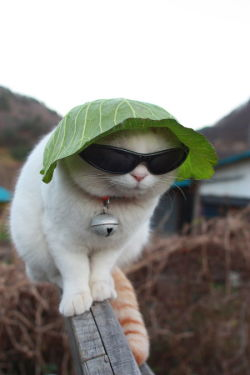 i bet i look way cooler like this