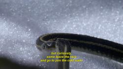 lemon-soju:i support u lazy gay snake