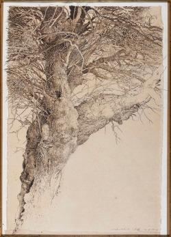 Jean-Pierre Velly (Français, 1943-1990), Studio d'albero III, encre, crayon et sépia