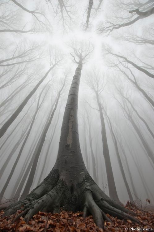 PhotoCosma Photography Nature Romania