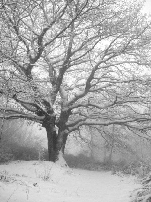 snow whiteside, mo - 500×667